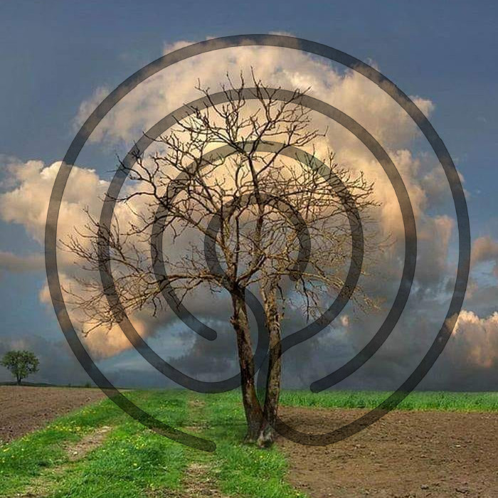 méditation nouvel an