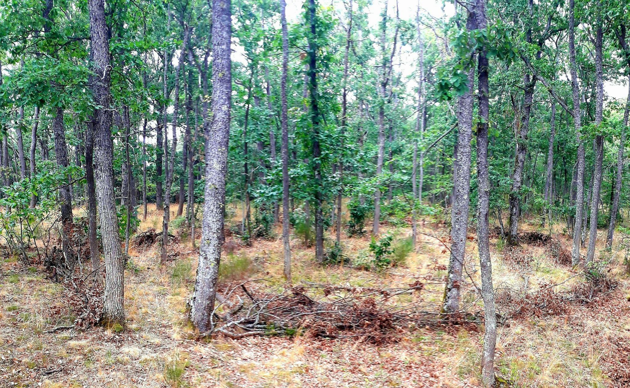 labyrinthe forêt méditation