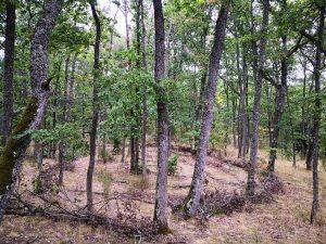 labyrinthe forêt