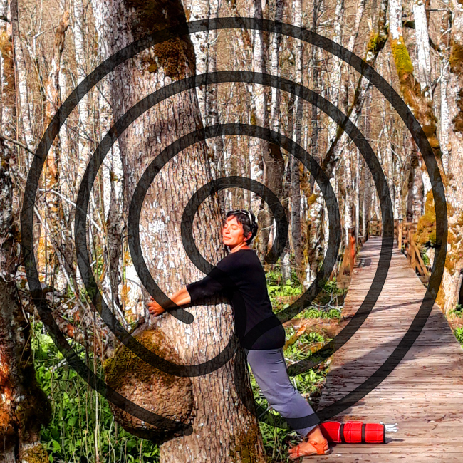 méditation arbre labyrinthe